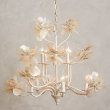 Pearled Magnolia Chandelier by Anthropologie White One Size Lighting