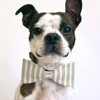 Grey and White Striped Dog Bow-tie - Bridal accessories for Dogs