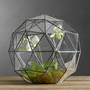Geodesic Terrarium