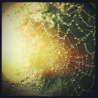 Morning Dew  Photograph by Alexandra Cook - Morning Dew  Fine Art Prints and Posters for Sale