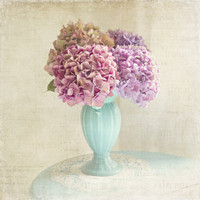 hydrangeas Art Print by Sylvia Cook Photography | Society6