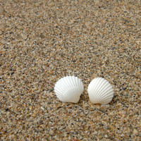 Small Tiny Seashell Earrings - Small Stud Earrings - White Natural Seashells - Summer Fashion