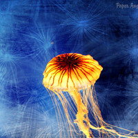 Jellyfish Photograph Jellyfishing Fine Art by paperangelsphotos