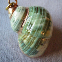 Gold Gilt Turbo Seashell