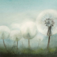 "Magic Art - Original Flower Watercolor Painting ""Dandelion Study"", Painted Dandelions Art (Aquarelle)"