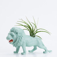 Air Plant Planter Room Decor, Lion Planter, College Dorm Animal Geekery