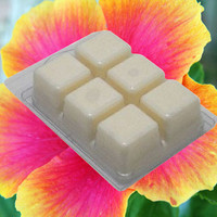 HIBISCUS & THAI PALM Soy Tarts - Clamshell - 6ct Breakaway