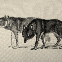 Two Wolves Engraving Digital Graphic Iron On Tote Bag Pillow Sheet Burlap Transfer Graphic Digital Downloads No. 186