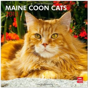 Maine Coon Cats 2013 Square 12X12 Wall Calendar (Multilingual Edition) BrownTrout Publishers