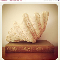 Cyber Monday 25% OFF - Huge Sea Shell - Shabby Chic Decor - Beach Decor - Nautical Decor
