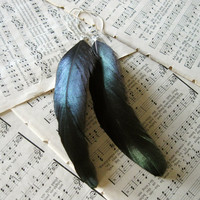 Marta Earrings - Long Iridescent Black Noir Coque Rooster Feathers on Handmade Sterling Silver Wires - Nature Bird Woodland Gift