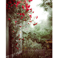 Back Yard fine art photo print nature red roses by GoldenSection