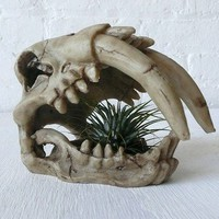 Saber Tooth Tiger Skull Air Plant Garden by EarthSeaWarrior