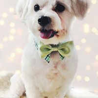 Dog Bow Tie and Neck Tie Double Shirt Collar Set Green Checkered and Grey Reversible (S/M)