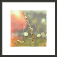 Beauty As We Feel It Is Something Framed Print By Alexandra Cook