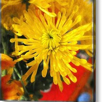 Yellow Chrysanthemum Acrylic Print By Alexandra Cook