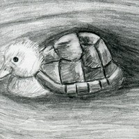Turtle Duck Pencil Drawing Black An.. on Luulla