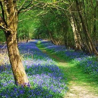 blue, flowers, forest, nature, path, trees - inspiring picture on Favim.com on we heart it / visual bookmark #17015718