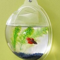 Wall Fish Bowls - Opulentitems.com