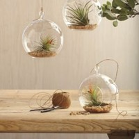 glass garden globe + plant