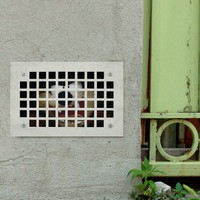 Blik Wall Decals: What the %$#@? Taz by Dan Witz