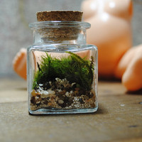 The sweetest little terrarium you will ever see by Run2theWild