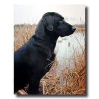 Black Lab Dog Lake Duck Hunting Animal Cabin Lodge Picture Art Print