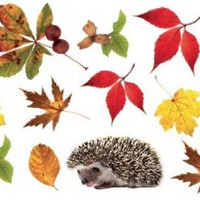 Posters: Autumn Poster-Sticker For Windows - Hedgehog And Autumn Leaves (23 x 15 inches)