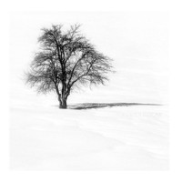 Winter photography Snow photography,tree,Minimalism,minimalist,  white wedding, snow, winter wedding, bride white, Black and White, 20x20cm