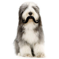 ThinkGeek :: Humunga Stache