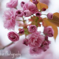 Blossom - 8x12 Fine Art Photograph on Luulla