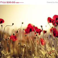 25% OFF, Red Poppy Print, fine art photography, Red flowers, red, gold, home decor, poppy art, ruby 8x10