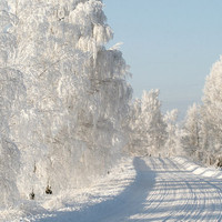 Fine art photography print, nature photography. Winter Road. Latvia. (8 x 12) by DMpics on Etsy.