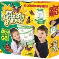 Amazon.com: Insect Lore Live Butterfly Garden: Toys &amp; Games