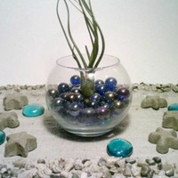 Air Plant Terrarium, Dark Blue, Glass Air Plant Holder, Marbles, Tillandsia