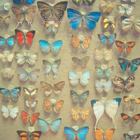 The Butterfly Collection Art Print | Print Shop