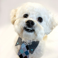 Dog collar shirt and tie by JalinaColon on Etsy