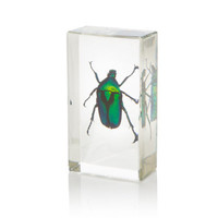 Arthropods in Resin - Flower Beetle