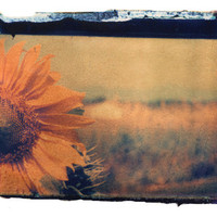 sunflower on film | She Hit Pause Studios