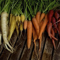 Colourful Carrot Mix Organic Seeds by cubits on Etsy