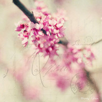 when love blooms, pink blossoms, fine art photography