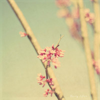 colors of spring, pink, blossoms, fine art photography
