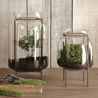 Glass Terrariums | west elm