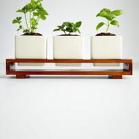 Culinary herb growing kit at RedEnvelope.com