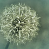 Make a Wish Dandilion Dreams by TerraVision on Etsy