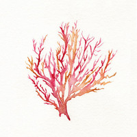 No. 3 Sea Coral  / Red / Pink / Yellow Ochre / Watercolor