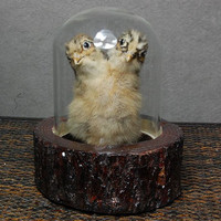 taxidermy of two head freak chick made by 2 chicks by lovefuture