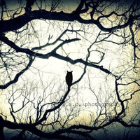Owl Photo Print Mysterious Woods85 x 11 inch by SSCphotography