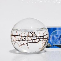 EcoSphere, Closed Aquatic Ecosystem