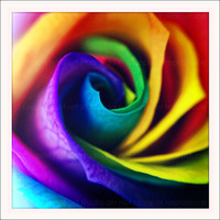 Colorful Rainbow Flower Rose 5x5 Retro Square by artstudio54